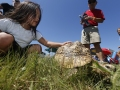 Cols-zoo-turtle